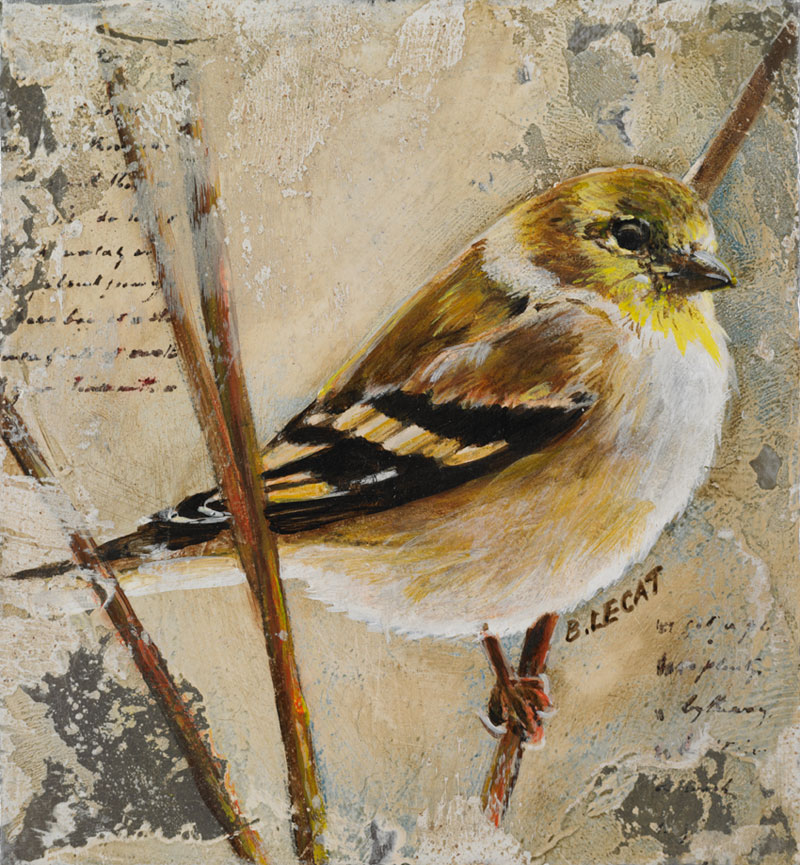 bonnielecat-goldfinch-2012-forweb
