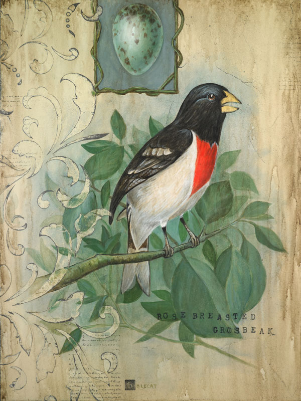 bonnielecat-rosebreastedgrosbeak-forweb_0