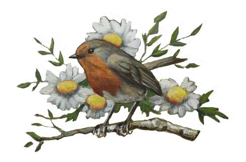About-Bird-Divider