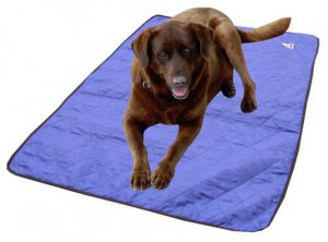 keep your dog comfortable with this great cooling mat