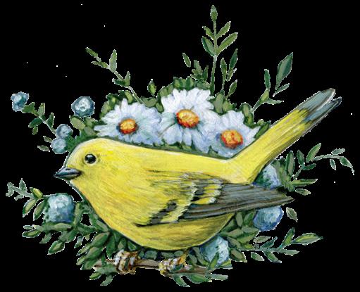 Footer-Bird