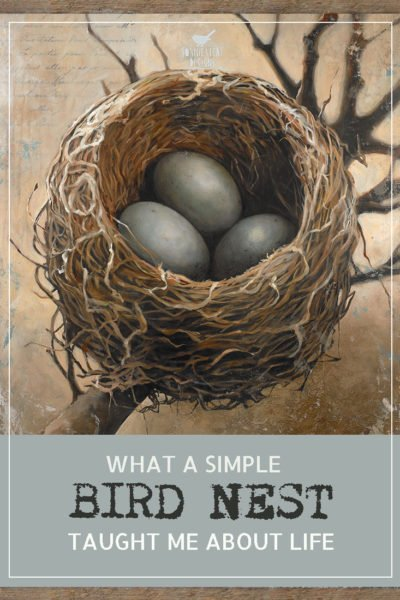 """WHAT A SIMPLE BIRD NEST TAUGHT ME ABOUT LIFE"""